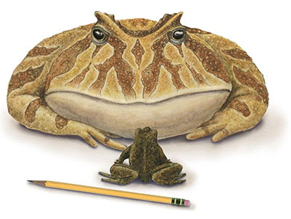 Frog from Hell