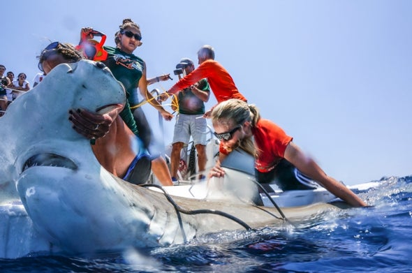 To Help Sharks, Conservationists Spy on Them