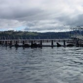 HUON SEALS: