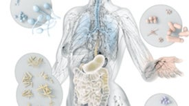 Explore the Human Microbiome [Interactive]