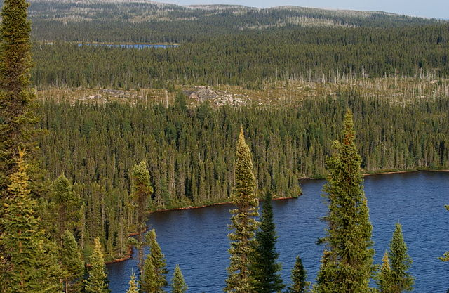 Massive Wildfires Speed Loss of Northern Trees