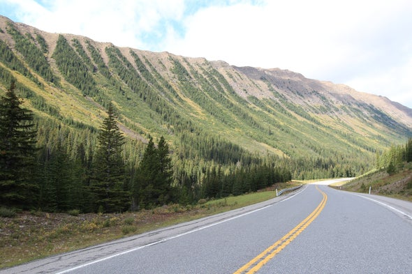 Highways Could Help Bears and Butterflies