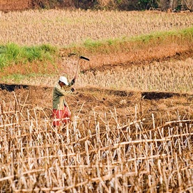 U.S. Farmers on Southern Plains Brace for Multiyear Drought