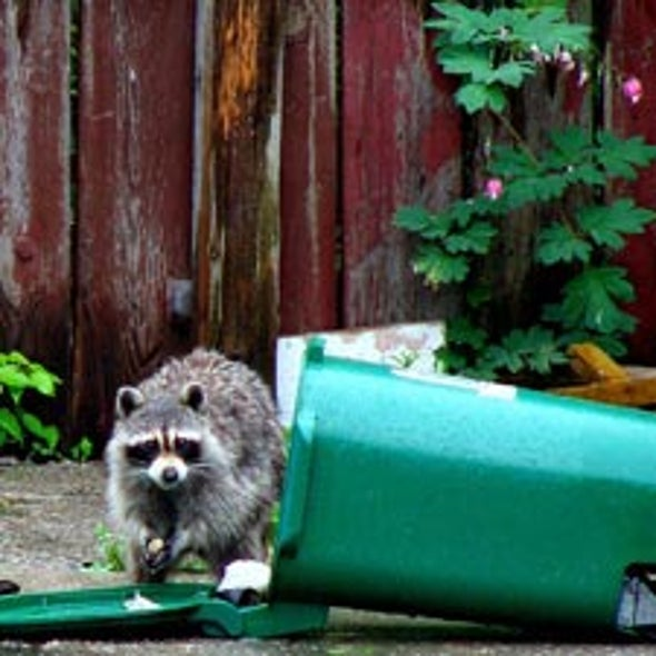 Trashing Gardens: Is There a Way to Use Compost without Attracting Unwanted Critters?