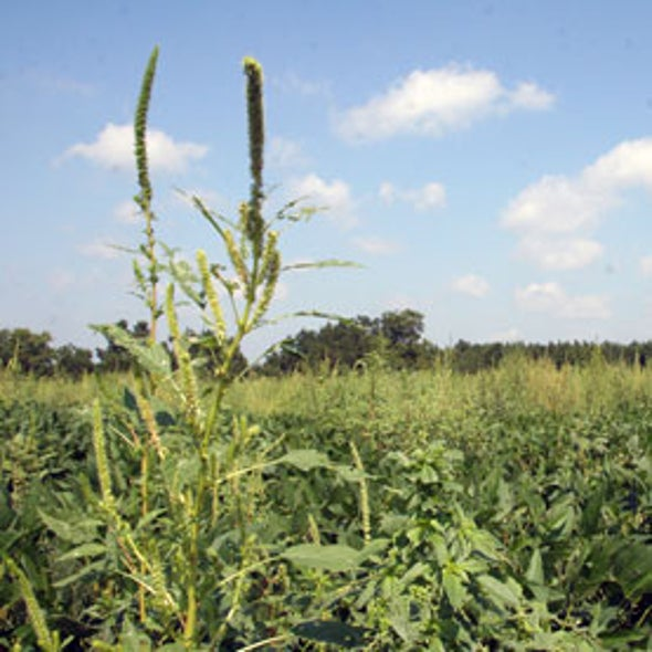 A Hard Look at 3 Myths about Genetically Modified Crops