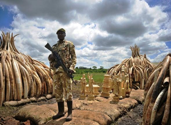 Why Kenya Is Burning 100 Tons of Elephant Ivory