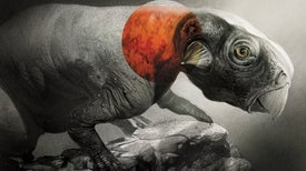 Fossil Pigments Reveal the True Colors of Dinosaurs
