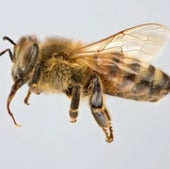06. Honey Bees