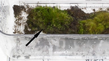 1,500-Year-Old Antarctic Moss Brought Back to Life