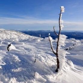 Siberia, cold