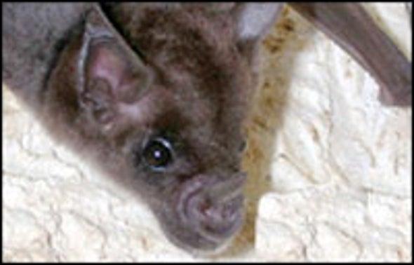 For Bats, Navigation Is a Problem of Statistics