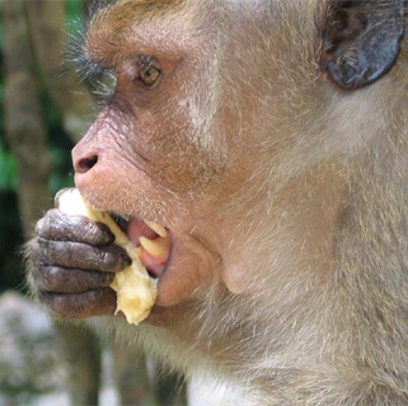 Primate Stem Cell Barrier Broken