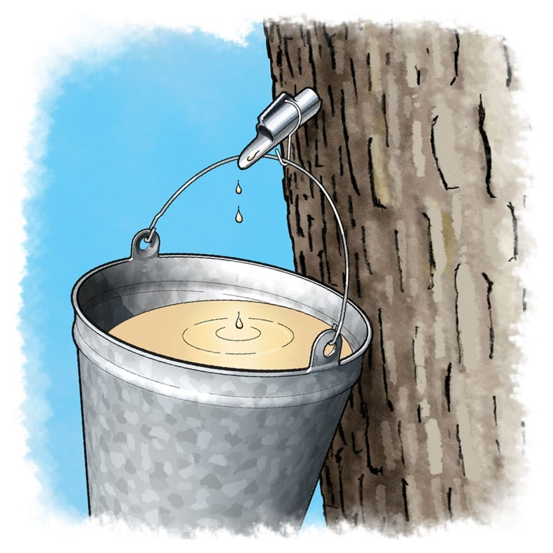 Maple Syrup Science: Cooking Up Some Candy