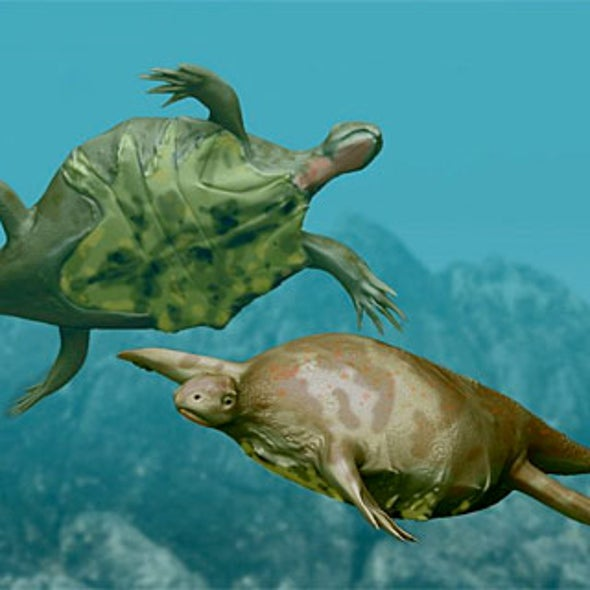 New Fossil Shows How the Turtle Got Its Shell