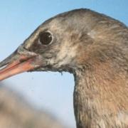Solar Farms Threaten Birds