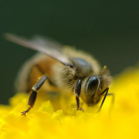 Growth Industry: Honeybee Numbers Expand Worldwide as U.S. Decline Continues
