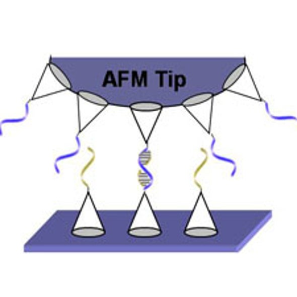 Seeing the Little Picture: Novel Nanocoating Gives Atomic Force Microscope Users a Better Look at Individual Molecules