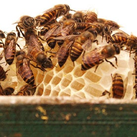 Beekeepers Abuzz Over Climate Change and Hive Losses