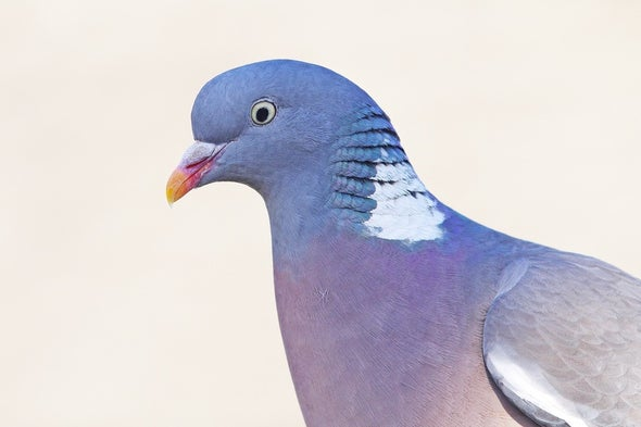 Bird Brains Are Far More Humanlike Than Once Thought