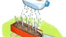 Can Plants Help Slow Soil Erosion?