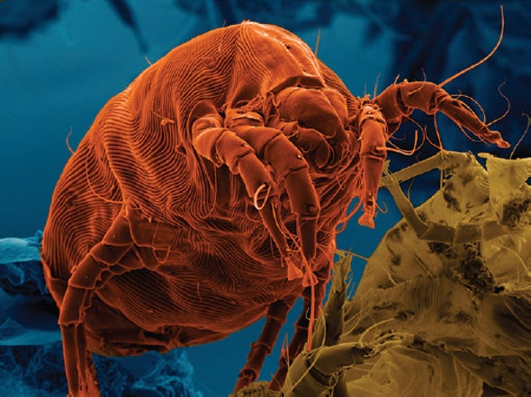 Go West, Allergy Sufferers: Dust Mites Avoid Arid America