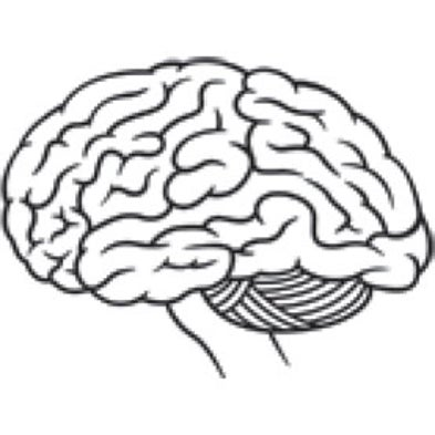 How Has The Human Brain Evolved Scientific American