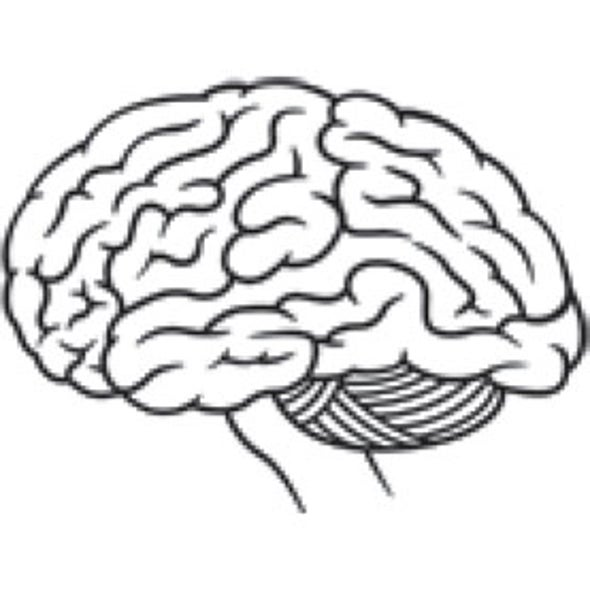 How Has the Human Brain Evolved?