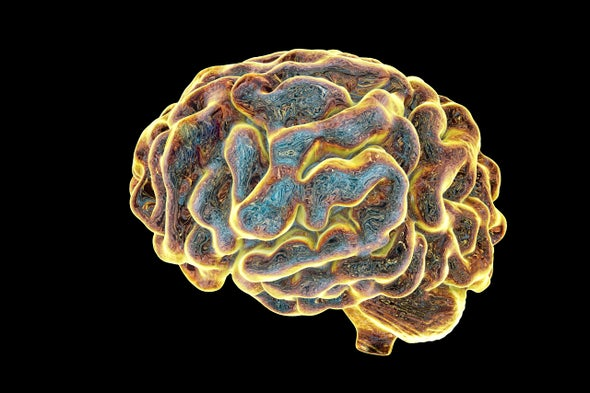 Growing Brains in the Lab - Scientific American