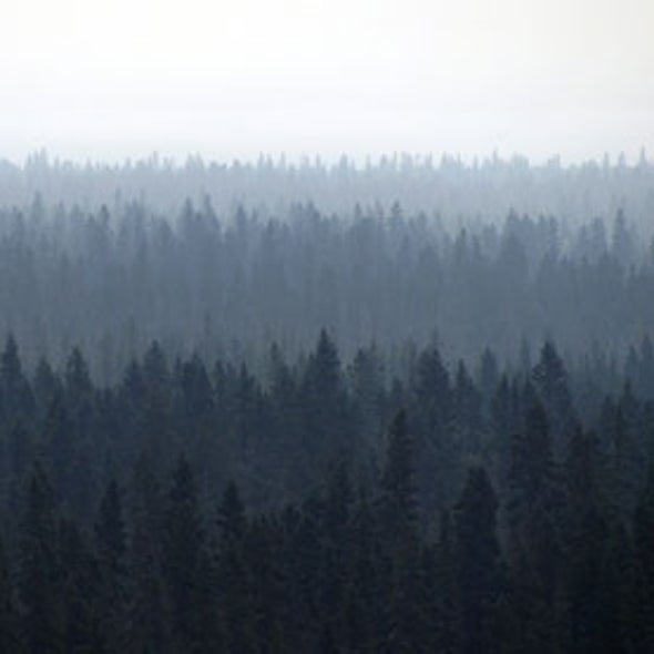 Boreal Forests Burning More Now Than Any Time in Past 10,000 Years