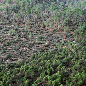 Wild Weather Can Send Greenhouse Gases Spiraling