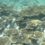 Can Coral Nurseries Bring Reefs Back from the Brink? [Slide Show]