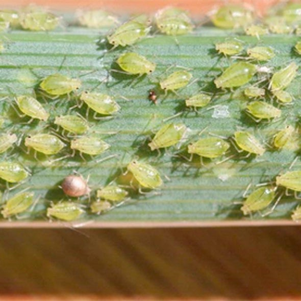 First Evidence Found for Photosynthesis in Insects