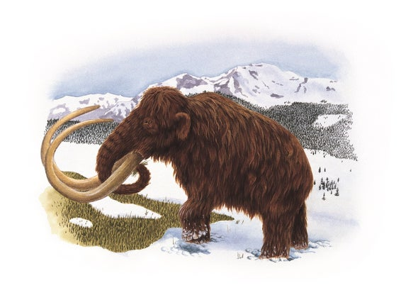 Last Woollies Had Mammoth Mutations