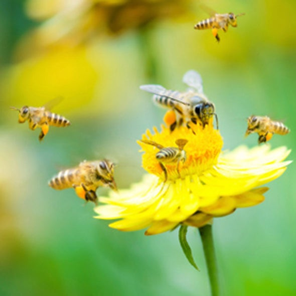 The Mind-Boggling Math of Migratory Beekeeping