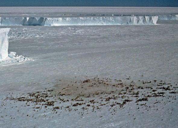 Bird's-eye view of penguin poo