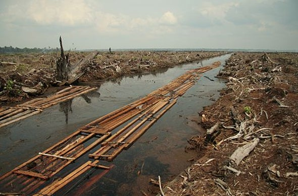 Deforestation in Indonesia Is Double the Government's Official Rate