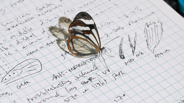 See through the Glasswing Butterfly's Fascinating Wings