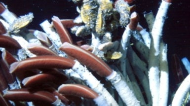 Massive Ocean Eddies Stir Up Life around Deep-Sea Vents
