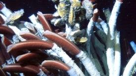 Massive Ocean Eddies Stir Up Life around Deep-Sea Vents