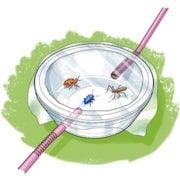 Species Science: Exploring Bug Biodiversity