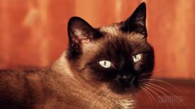 Seizures in Elderly Cats
