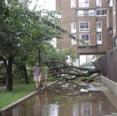 DOWNED TREE: