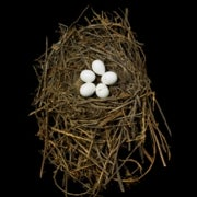 Not Just for the Birds: A Showcase of Nests from Museum Collections