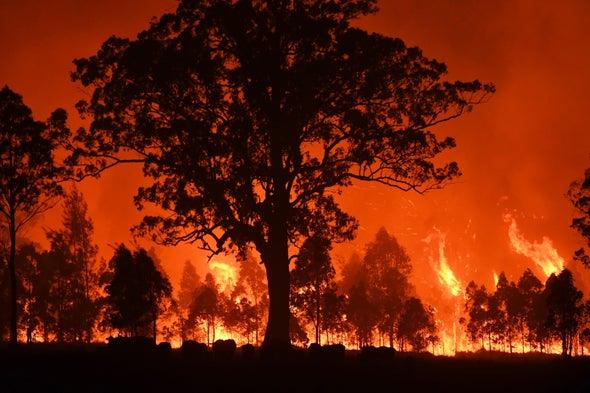 Australian Bush Fires Belched Out Immense Quantity of Carbon