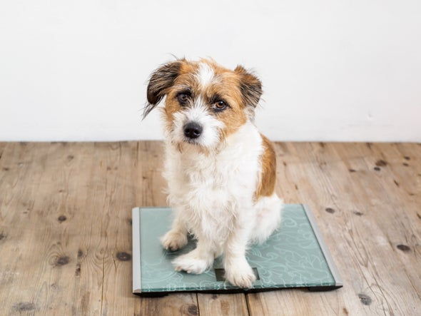 How Weight Bias May Affect Dogs and Their Owners