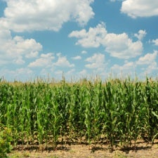 Genetic Engineering No Match for Evolution of Weed Resistance