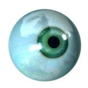 Accidental Discovery Could Lead to Creation of Human Eyes in a Lab