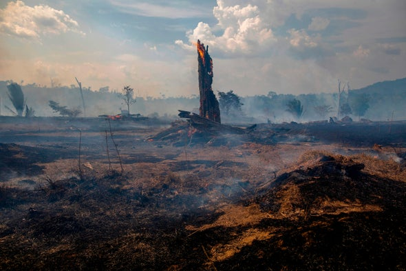 Wildfires Could Transform Amazon from Carbon Sink to Source