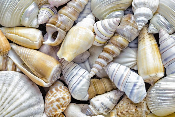 How are seashells created? Or any other shell, such as a snail's or a turtle's?