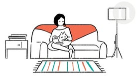 How Cats Leapt from the Wild to Our Sofas